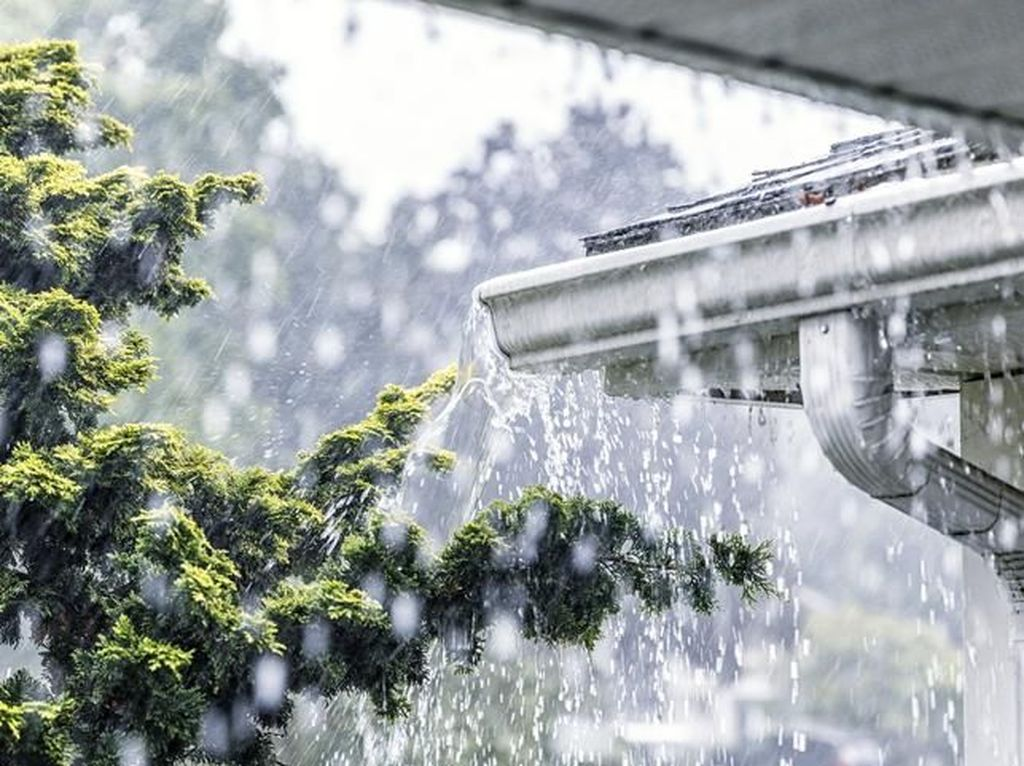 Musim Hujan Tiba, Konsumsi 5 Makanan Ini untuk Perkuat Sistem Imun Tubuh