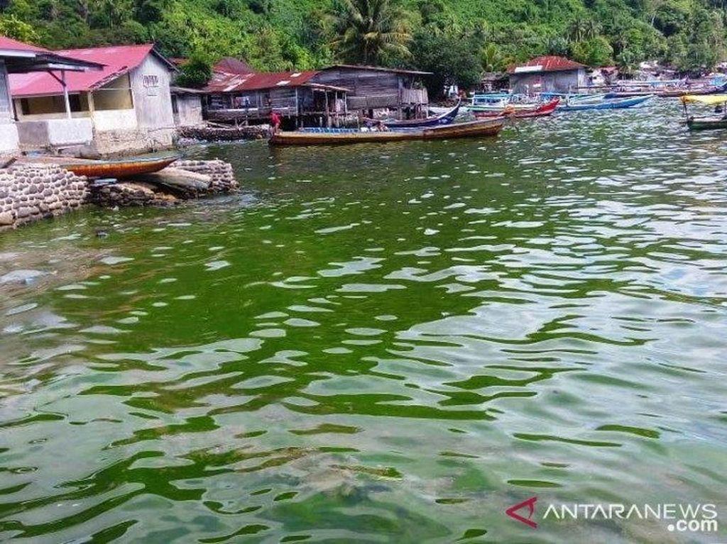 Air Laut di Padang Berubah Jadi Hijau