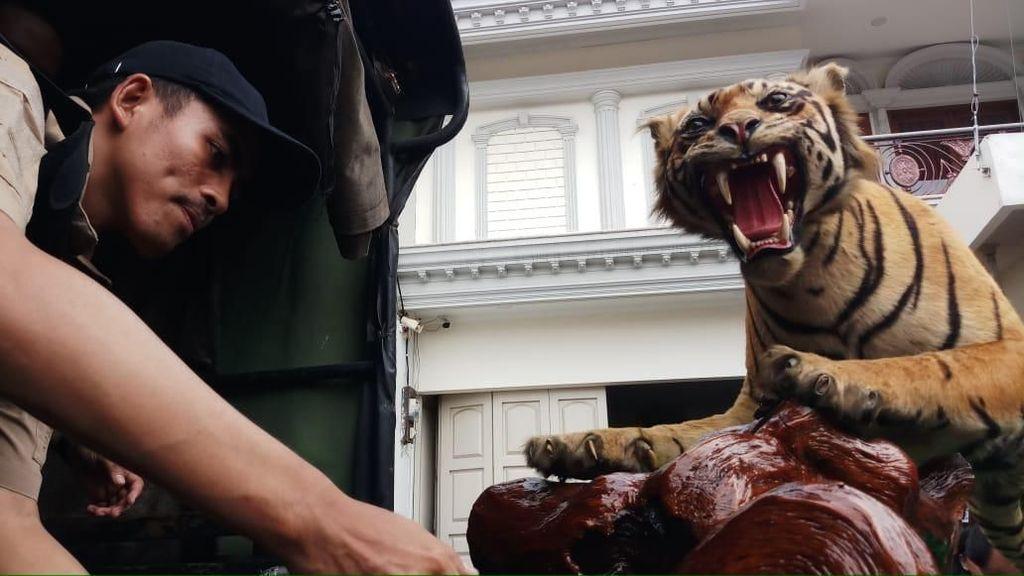 Penampakan Harimau-Rusa Offset di Rumah Koboi Lamborghini