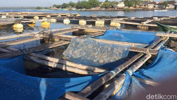 Di Depan Edhy Prabowo, Nelayan Kecam Keras Ekspor Benih Lobster