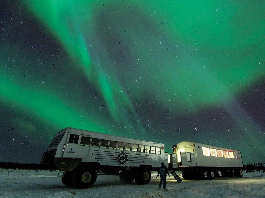 Keren Banget! Restoran Ini Tawarkan Sensasi Makan Sambil Lihat Aurora dan Beruang Kutub
