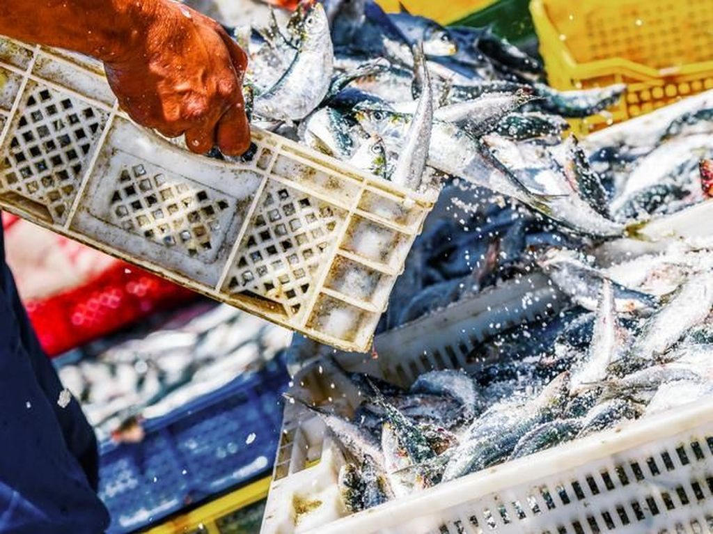 Waduh! 1.000 Orang Positif COVID-19 dari Klaster Pasar Seafood di Thailand