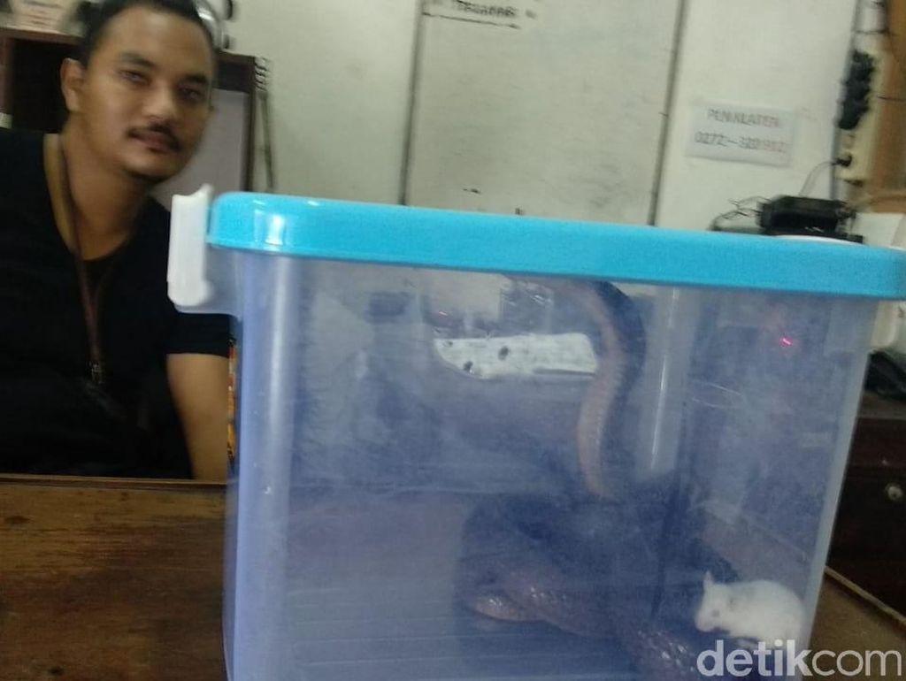 Damkar Klaten Tangani 254 Laporan Gangguan Kobra-Tawon di Tahun 2019