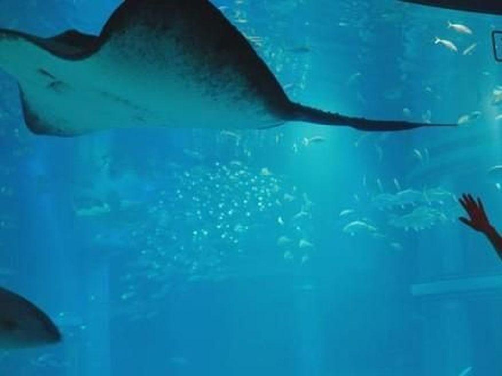 Foto: Akuarium Terbaik di Jepang