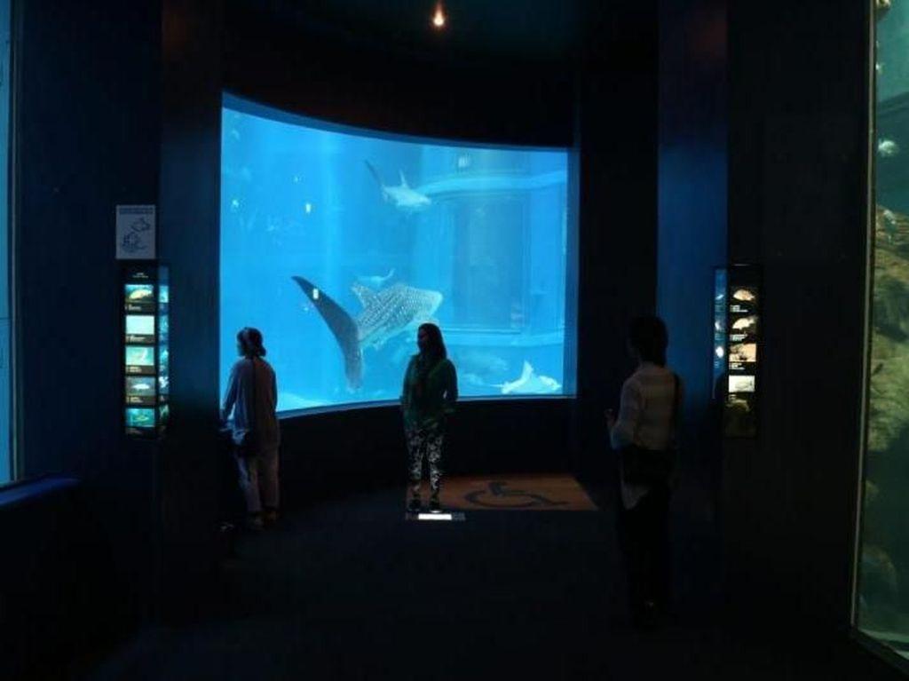 Melihat Ratusan Hewan Laut di Kaiyukan Aquarium Osaka
