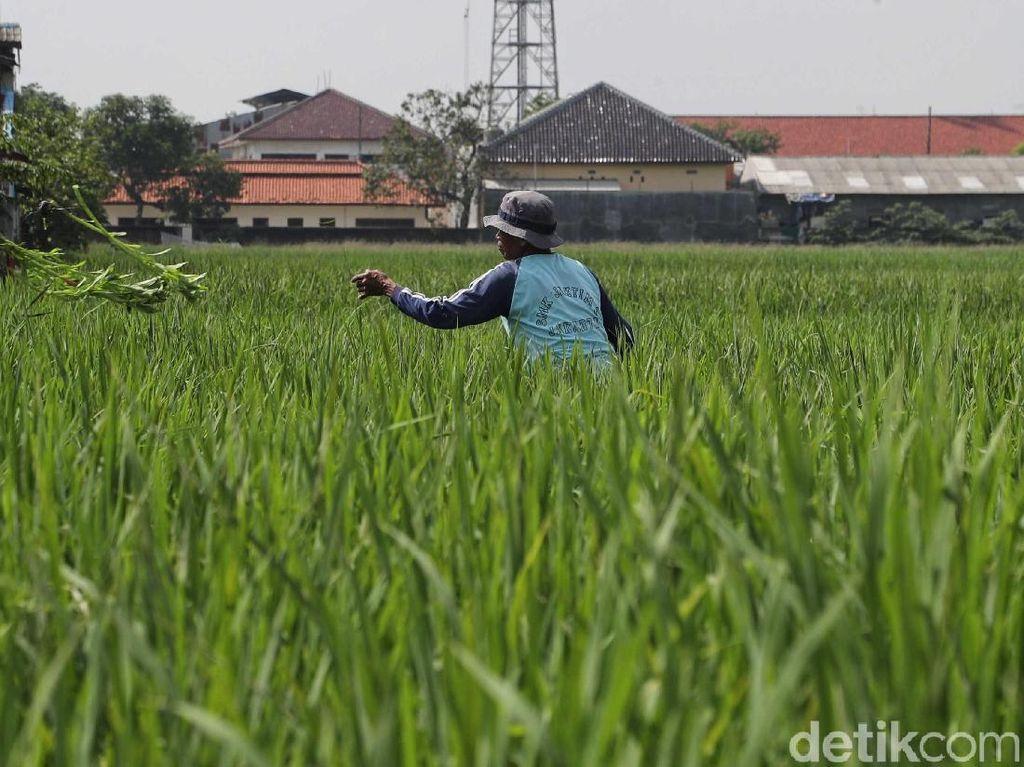 RI Bakal Kembali Gelar Forum Pertanian dan Pangan Internasional