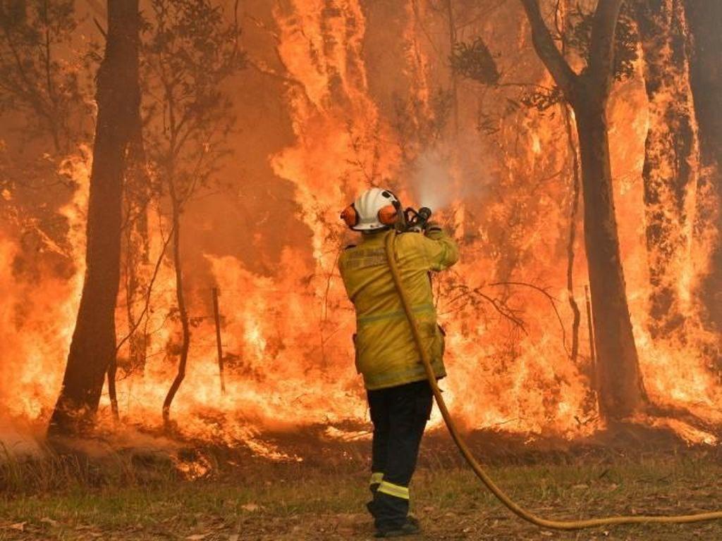 Kebakaran Hutan Australia, Petugas Damkar Kecam PM Morisson