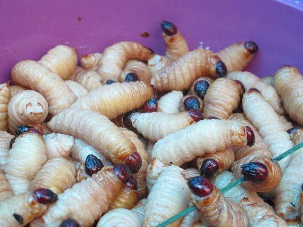 Foto: Makan Ulat Sagu Papua, Mau Coba?