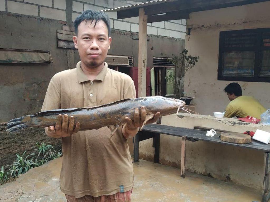 Bersihkan Lumpur Sisa Banjir, Warga Jaksel Temukan Lele Jumbo di Kamar