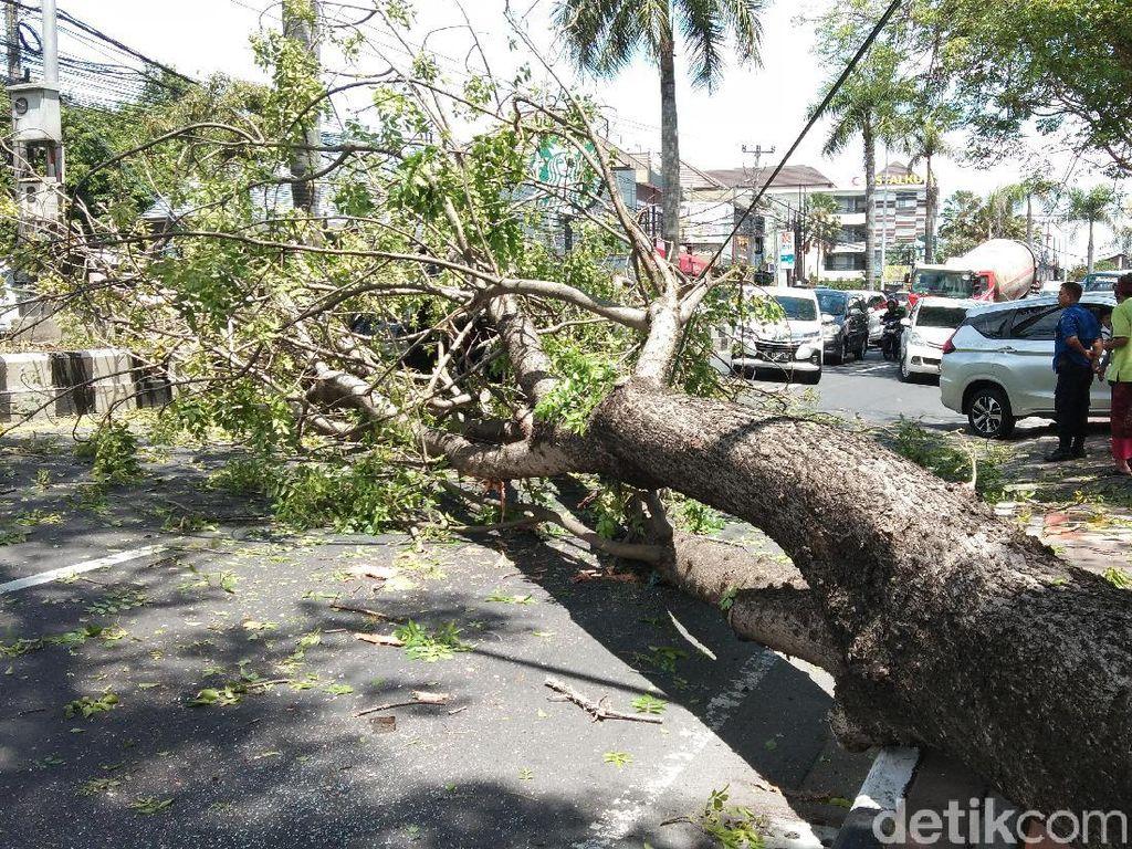 Pohon Tumbang Timpa Mobil di By Pass Ngurah Rai Bali