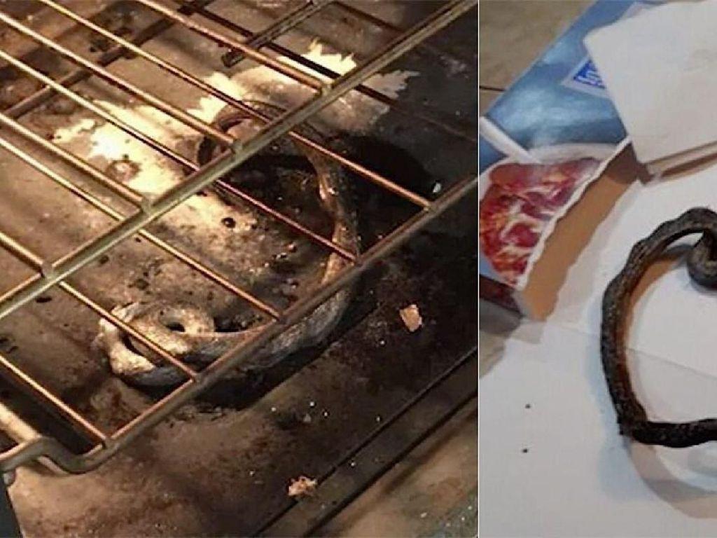 Waduh! Panggang Pizza, Keluarga Ini Malah Panggang Ular di Oven