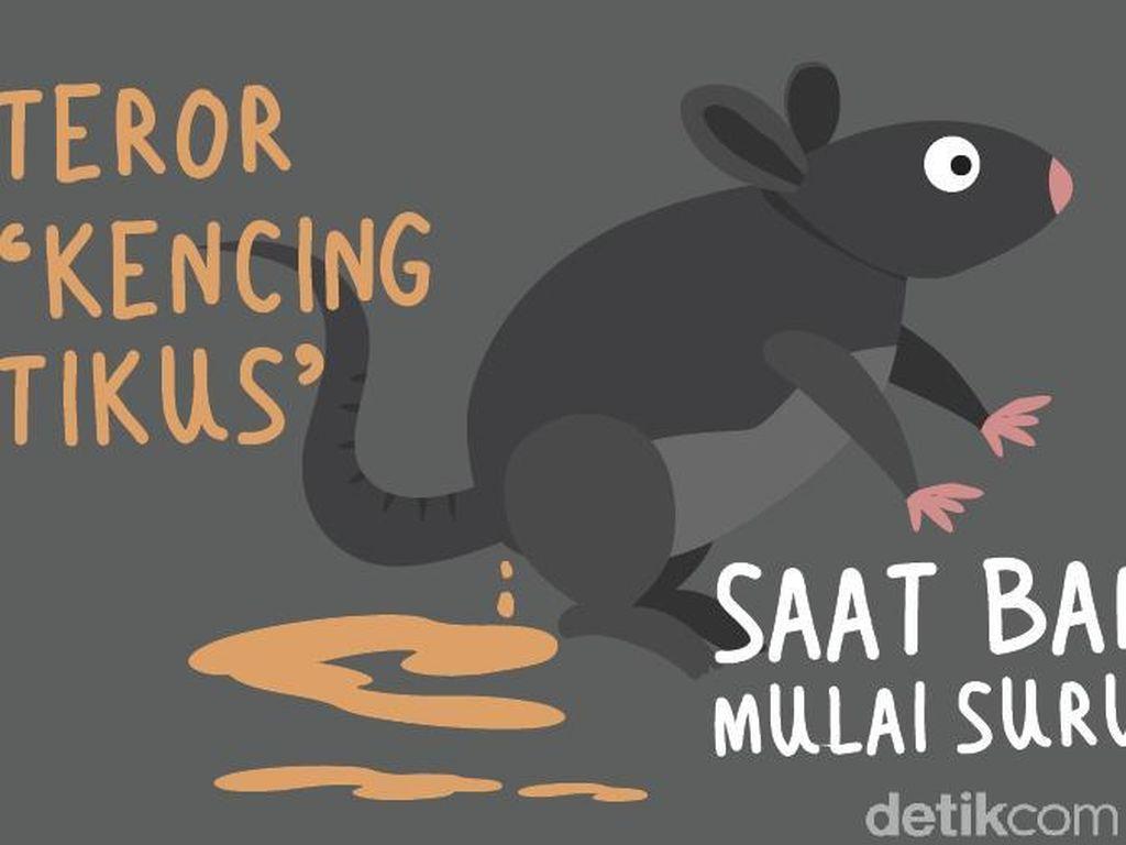 Teror Leptospirosis Kencing Tikus Saat Banjir Mulai Surut