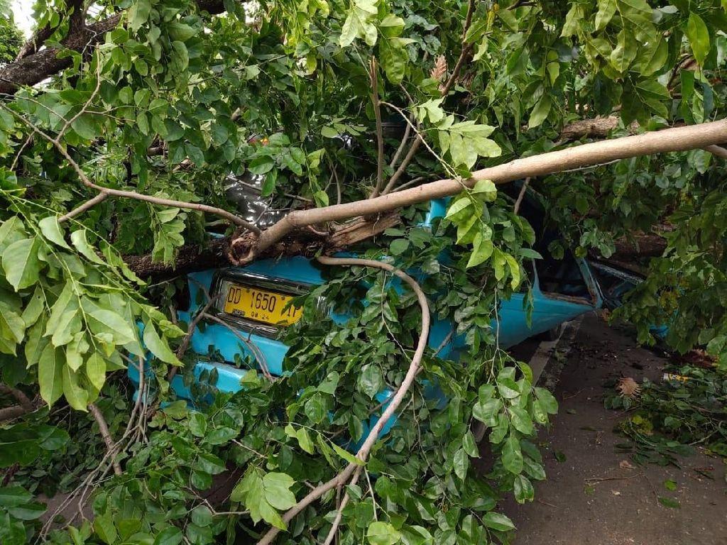 Pohon Tumbang Timpa Pete-pete di Makassar, Sopir-Penumpang Selamat