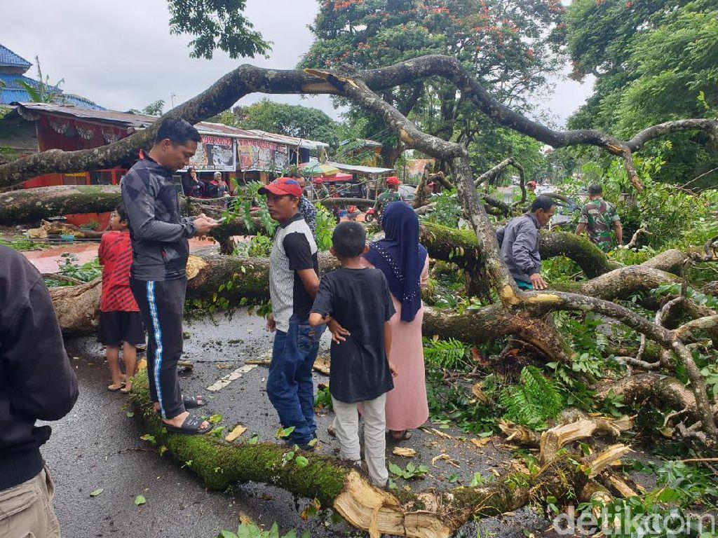 Dahan Pohon Peninggalan Belanda Patah di Malino, 3 Orang Terluka