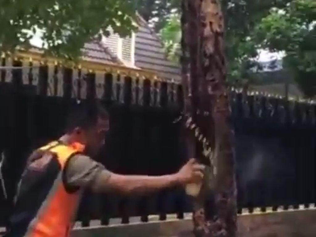 Saat Satpol PP Surabaya Sempat Bingung Hadapi Pohon Berasap