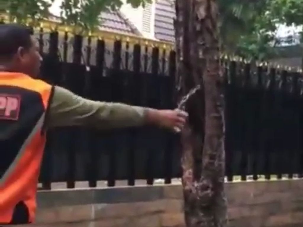 Sebuah Pohon di Surabaya Tiba-tiba Keluarkan Asap, Apa Penyebabnya?