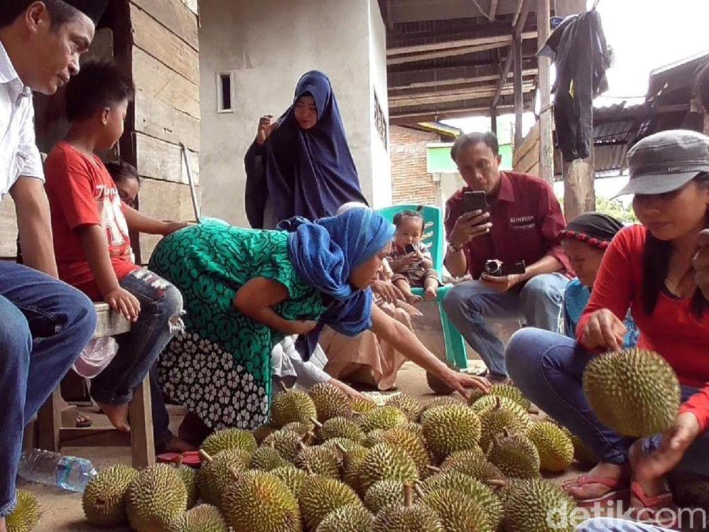 Foto: Tradisi Bagi-bagi Buah Sambut Panen di Sulawesi