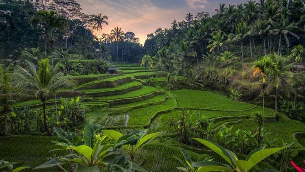 Foto: Bali & 9 Destinasi Paling Instagramable Tahun 2020