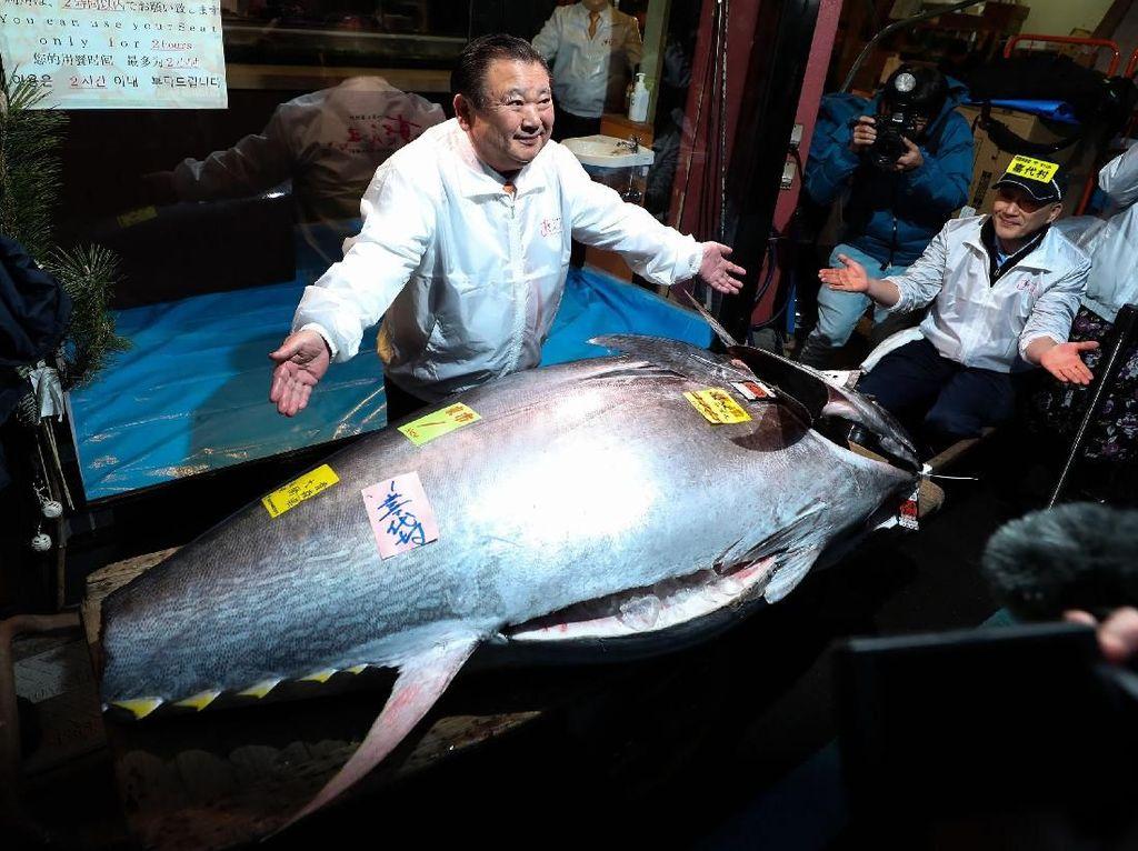 Super! Pengusaha Ini Bawa Pulang Ikan Tuna Seharga Rp 24 M