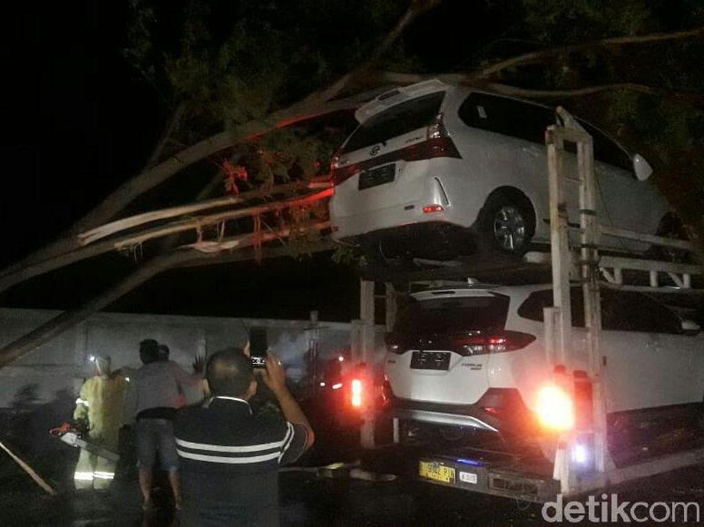 Pohon Tumbang Timpa Truk di Pantura Situbondo, Arus Lalin Mengular 2 Km