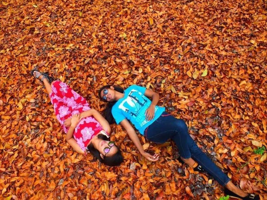 Seperti Luar Negeri, Daun-daun Berguguran di Kota Soe