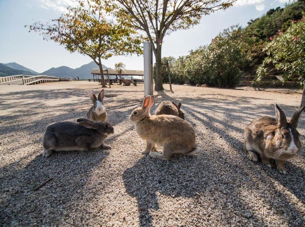Bekas Pulau Beracun yang Kini Dihuni Kelinci Imut