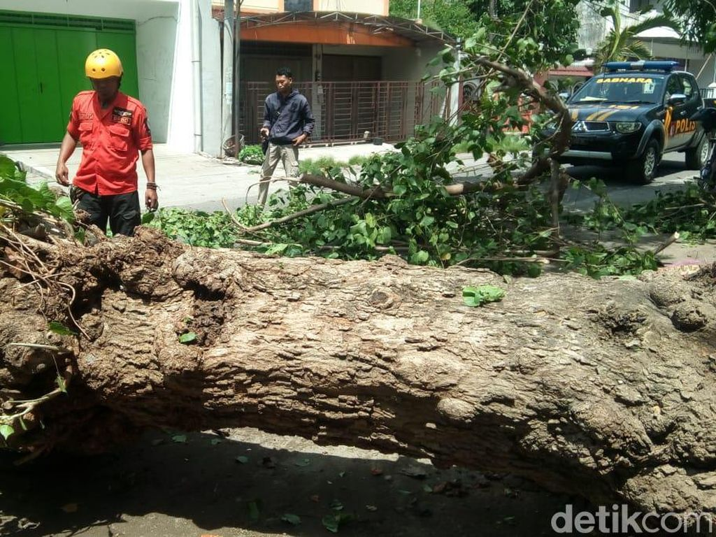Pohon Tumbang Timpa Warga Ponorogo, Satu Orang Patah Tulang