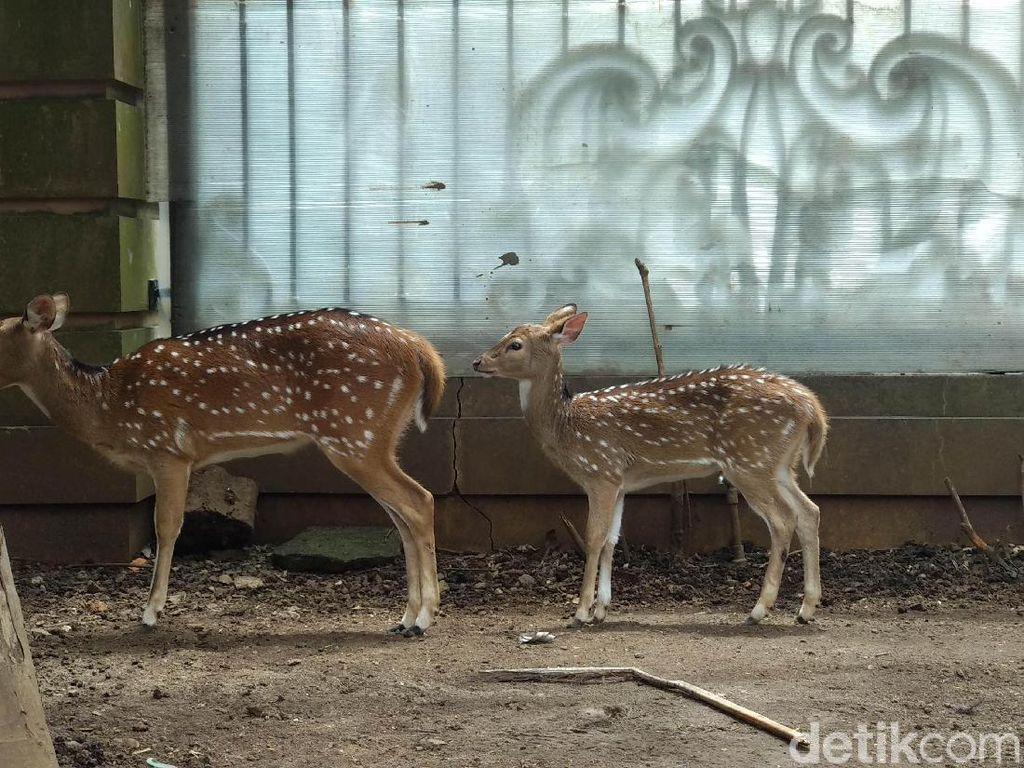 Punya Kebun Binatang, Sepupu Raffi Ahmad Mau Tekan Peredaran Hewan Ilegal