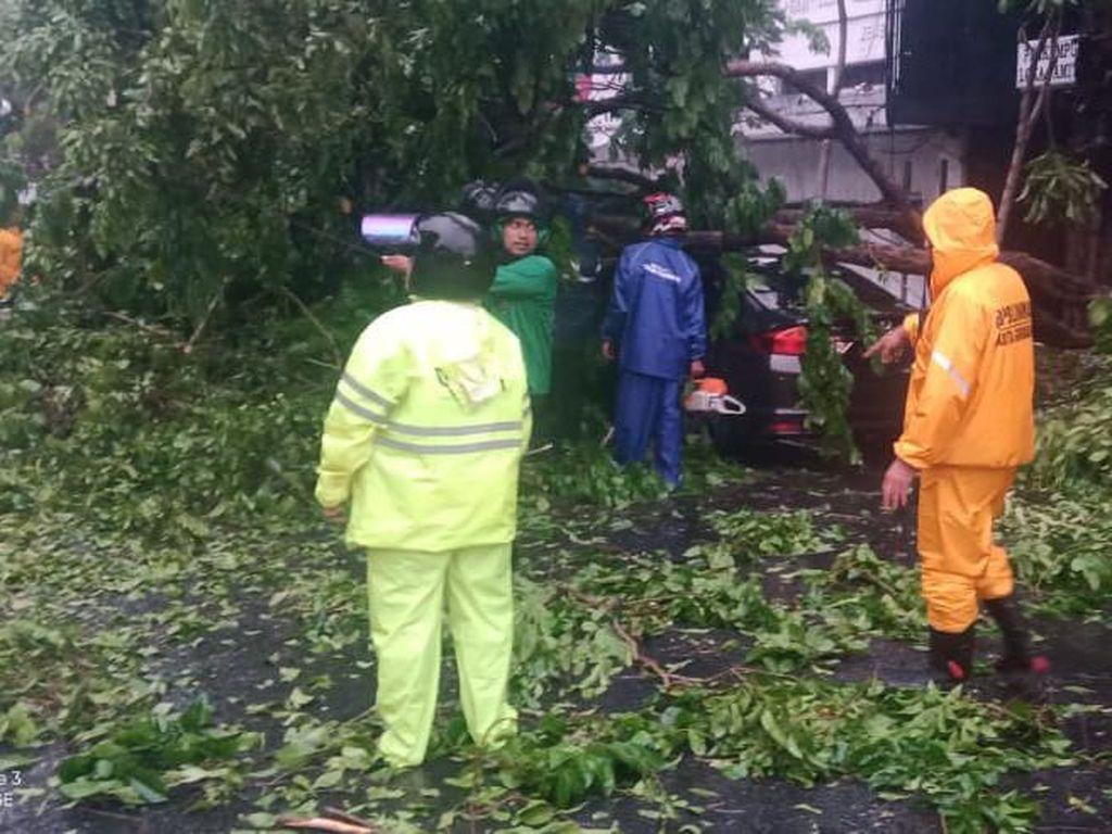 Hujan Disertai Angin Kencang Tumbangkan 77 Pohon di Surabaya