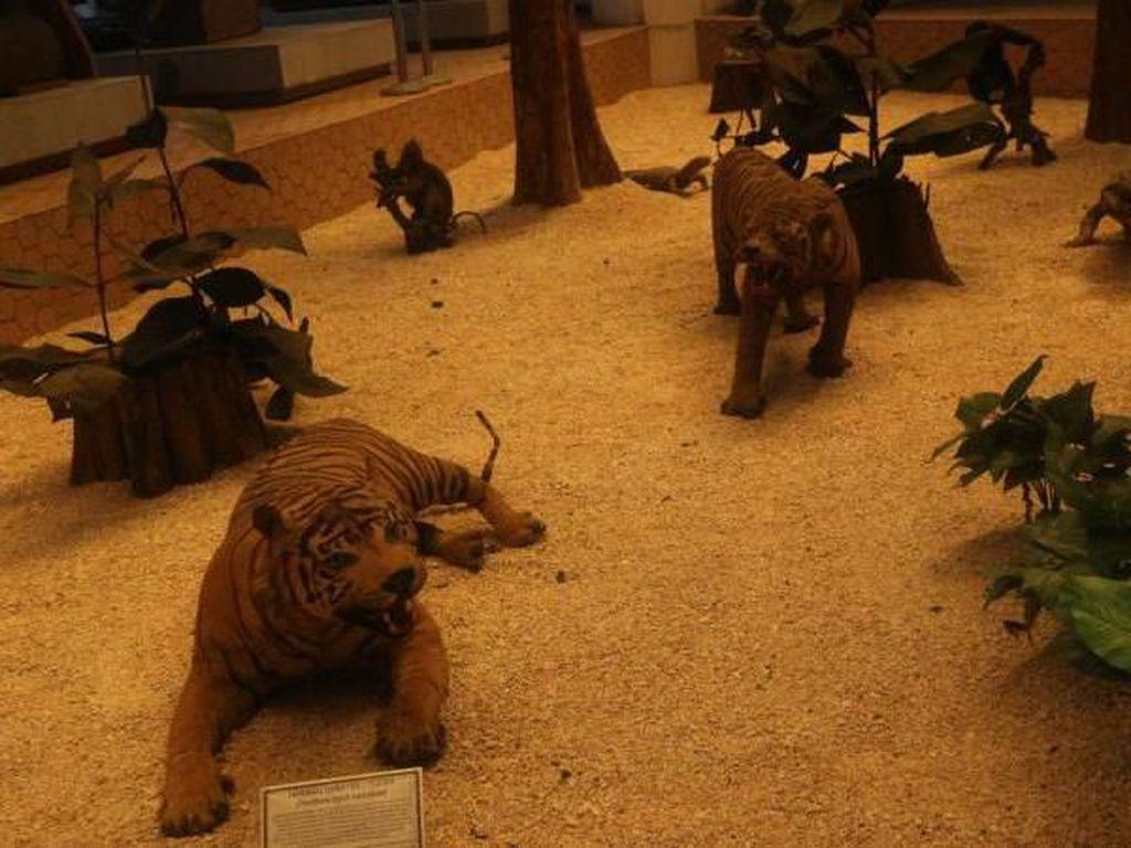 Yuk, Intip Museum Bertema Hutan