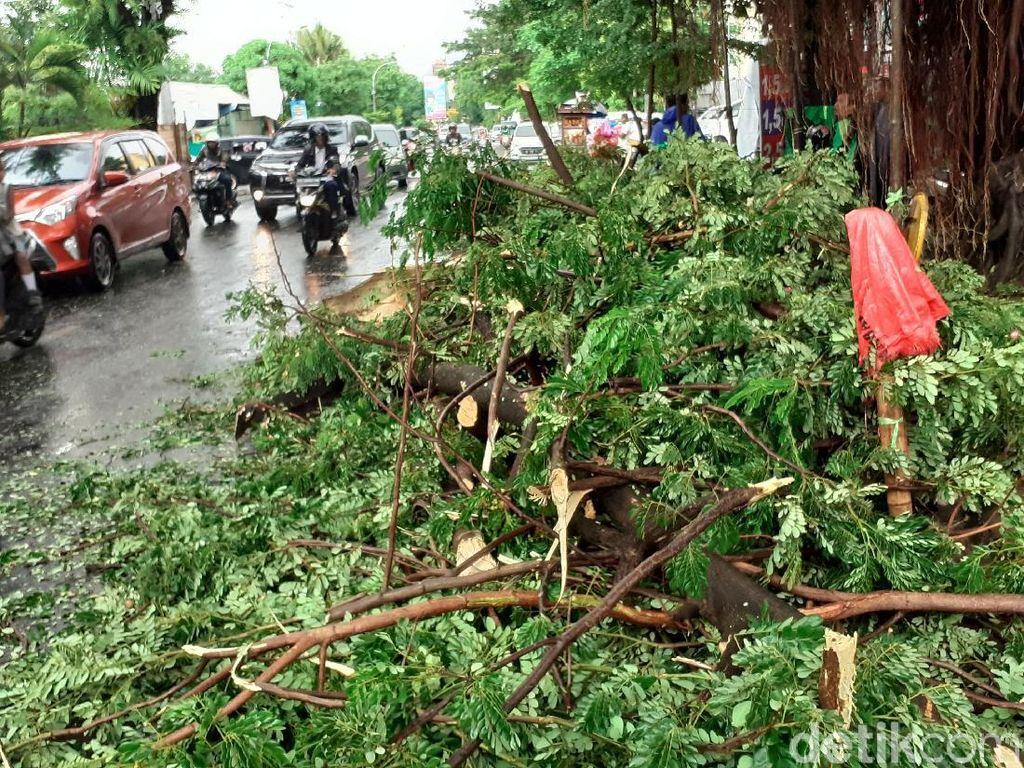 Pohon Trembesi Tumbang Timpa Motor Ojol di Makassar
