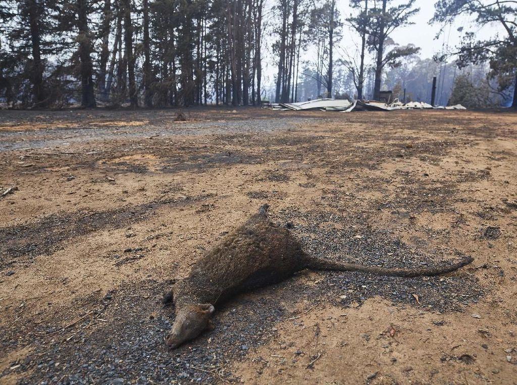 Kerusakan Akibat Kebakaran Hutan di Wingello, Australia