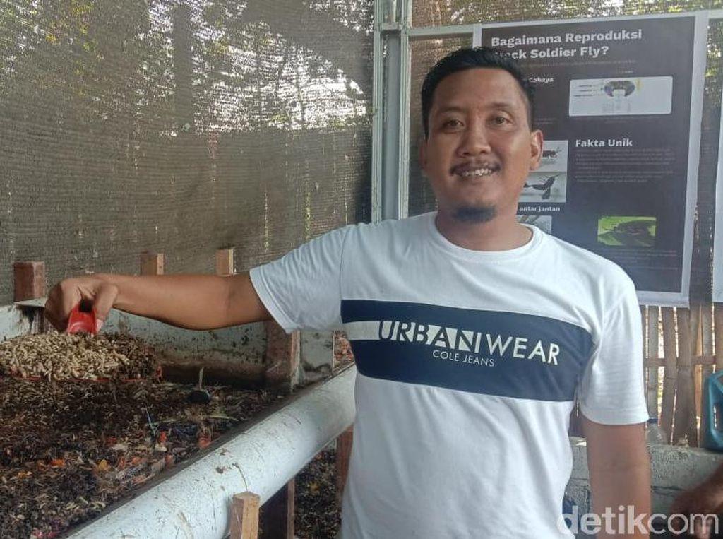 Budidaya Maggot Bagi Warga Banyuwangi Jalan Keluar dari Permasalahan Sampah
