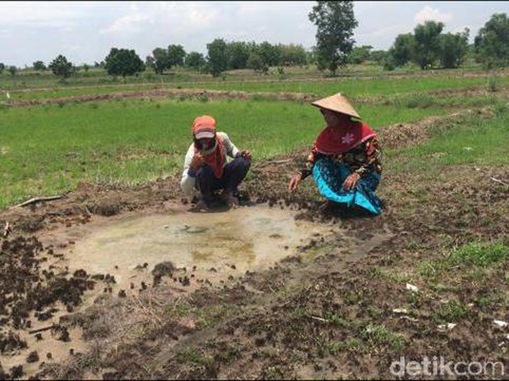Sawah Keluarkan Air Asin Bercampur Minyak di Mojokerto Tak Bisa Ditanami