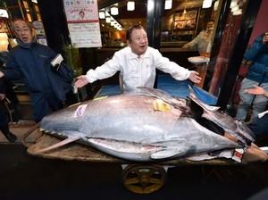 Jutawan Jepang Beli Tuna Raksasa Seharga Rp 25 M
