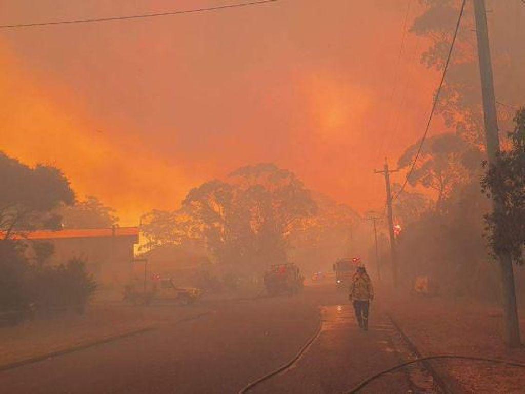 Situasi Kebakaran Hutan di Australia: 10 Juta Orang Terperangkap Api?