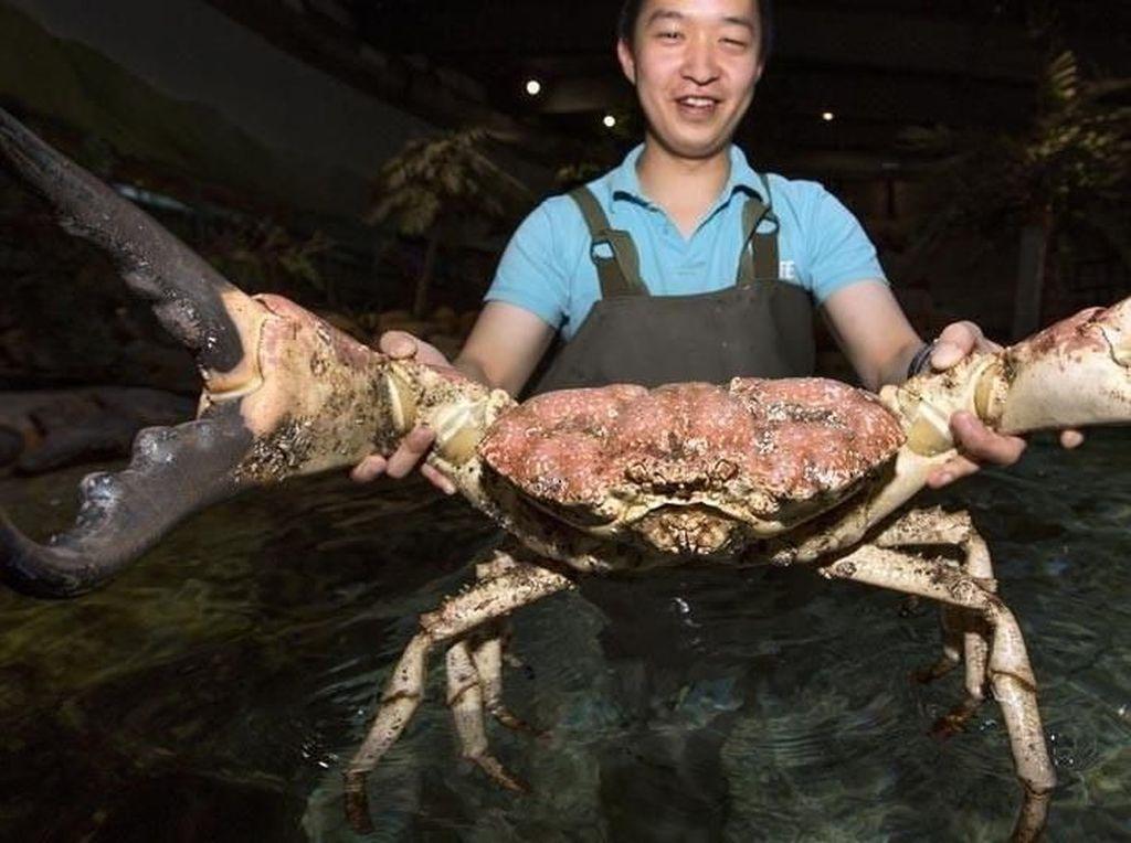 Temuan Seafood Ukuran Jumbo hingga Makanan Sumber Probiotik