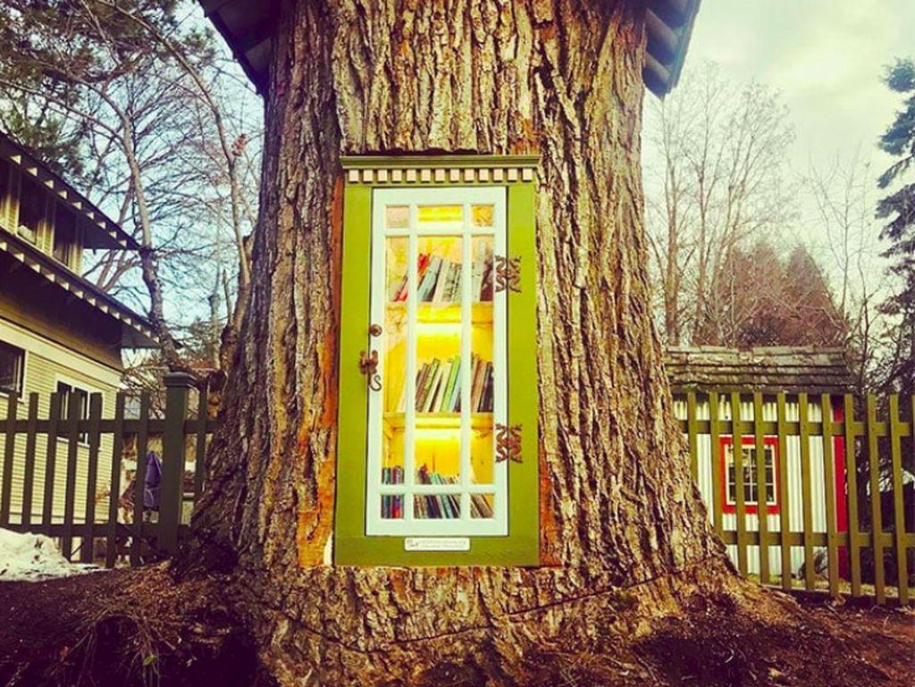 Foto: Pohon Usia 110 Tahun Mati, Diubah Jadi Perpustakaan Cantik Seperti Ini