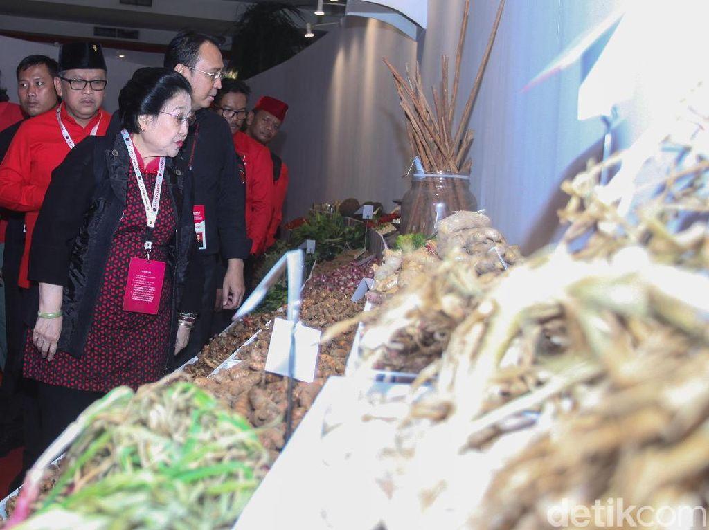 Gaungkan Kedaulatan Pangan, Megawati Cerita Canangkan Gerakan Menanam
