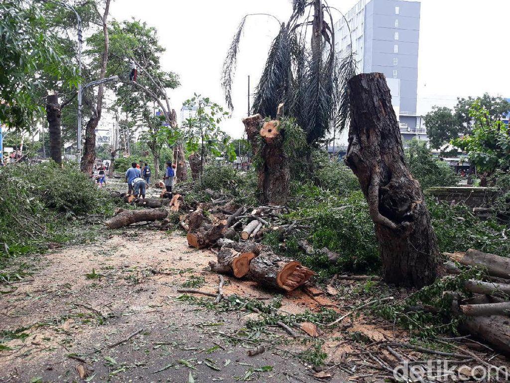 Tidak Ditebang, 377 Pohon Terdampak Flyover Purwosari Solo Dipindahkan