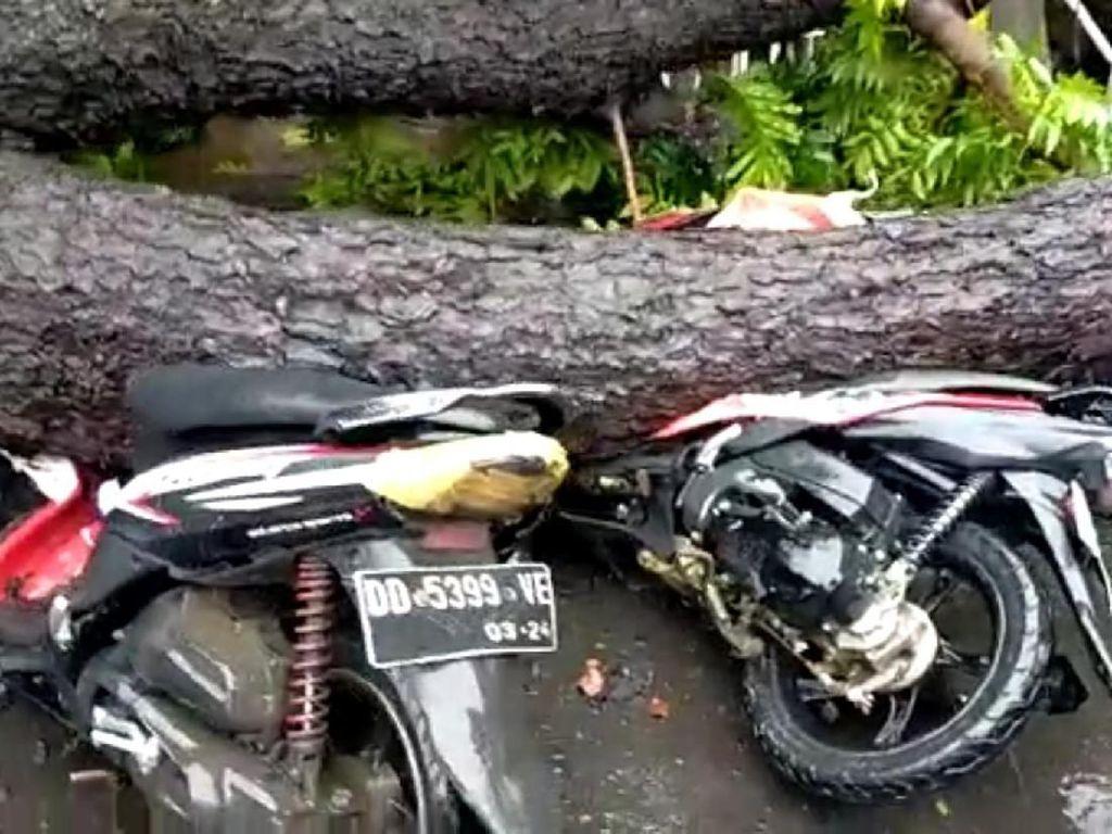 Pohon Tumbang Timpa 2 Motor di Jalan Amanagappa Makassar