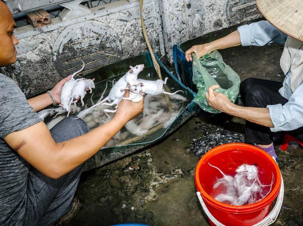 Karena Rasanya Enak, Tikus Jadi Hidangan Populer di 5 Negara Asia Ini