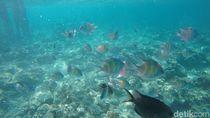 Foto: Surga Bawah Laut Pulau Karampuang di Mamuju