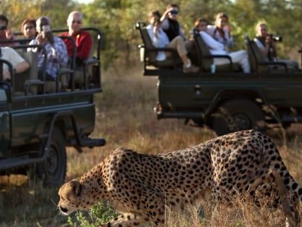 Turis Positif Corona di Taman Nasional Afrika