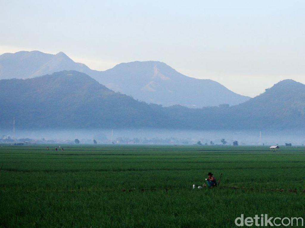 500.000 Ha Lahan Transmigrasi Dipakai untuk Dongkrak Produksi Pangan