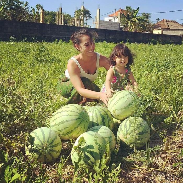 Bersama sang buah hati, Alexandra terlihat senang saat memanen buah semangka. Foto: Instagram @got_alex