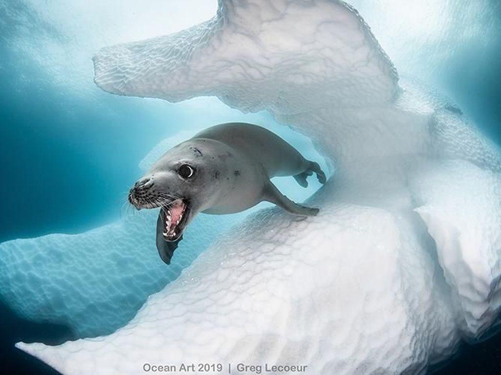 Karya Keren Jawara Kontes Fotografi Bawah Air