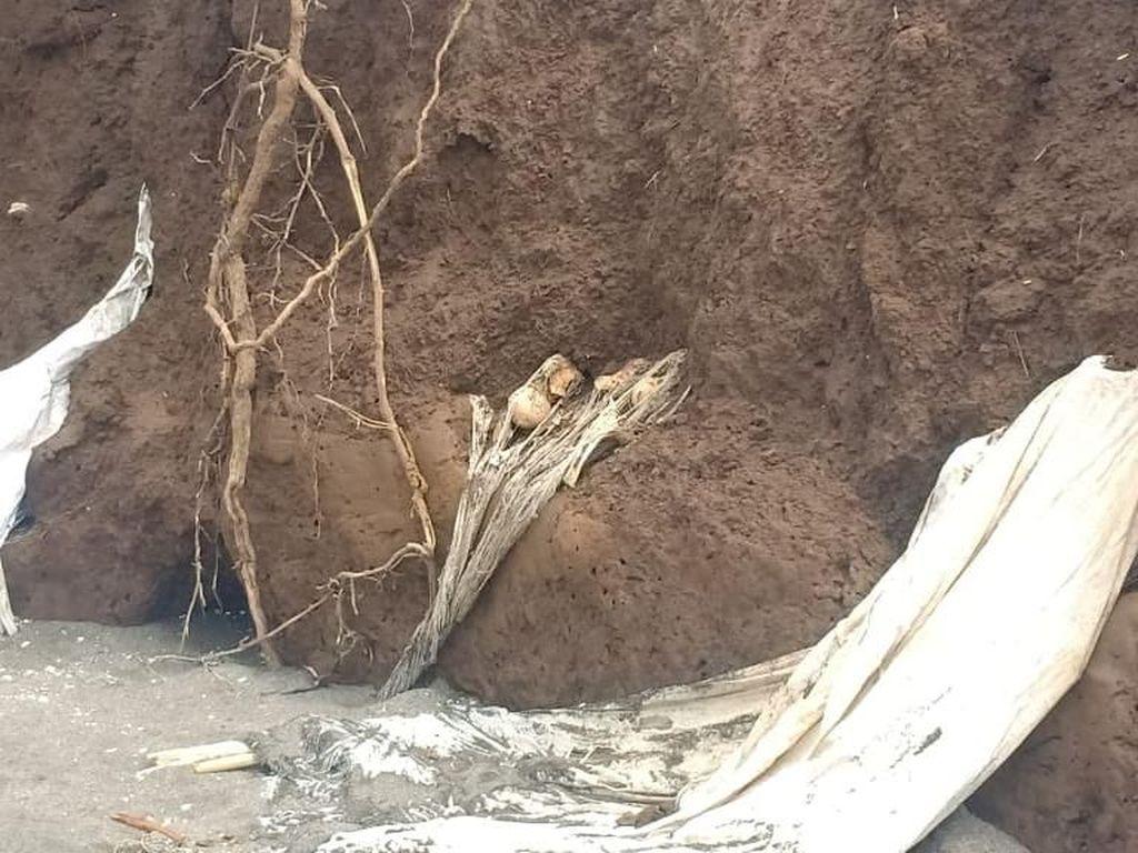 Abrasi di Takalar Sulsel Hantam Pekuburan, Kain Kafan Bermunculan