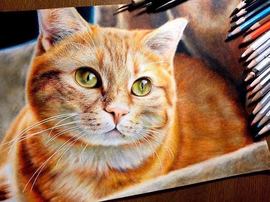 Sedang Musim Virus, Saran Pemkot Solo: Kucing Dikandangkan Dulu