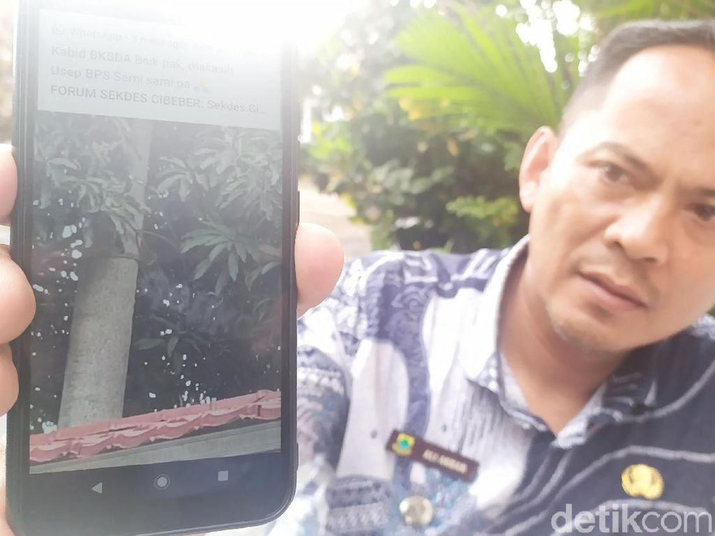 Tiga Ekor Surili Muncul di Pemukiman Warga Cianjur, Disangka Siluman